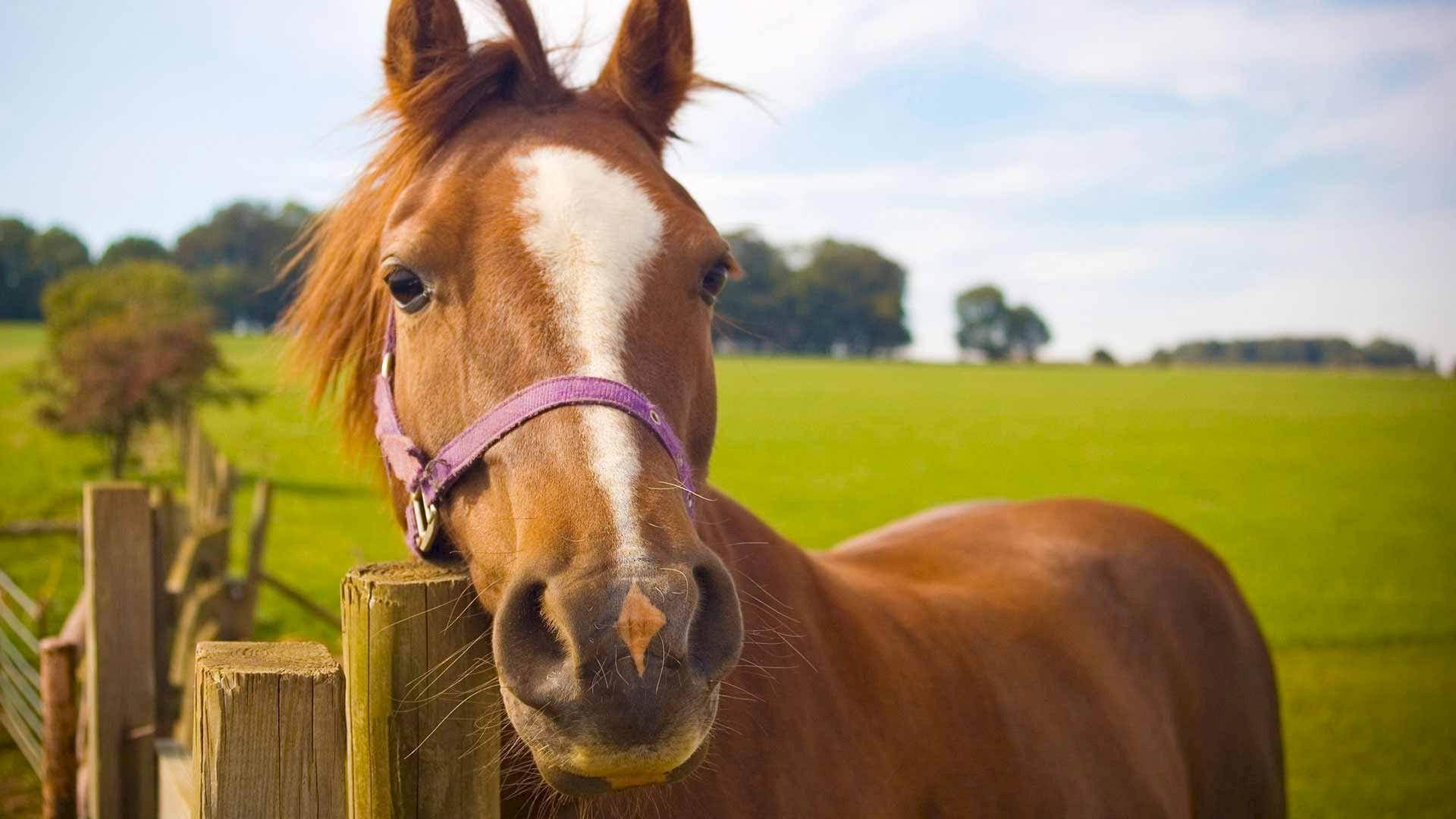Probiotika für Pferde
