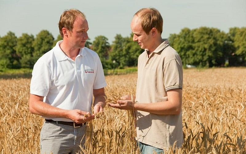 Quality check of the grain in the field by Wilhelm Kanne Jr.